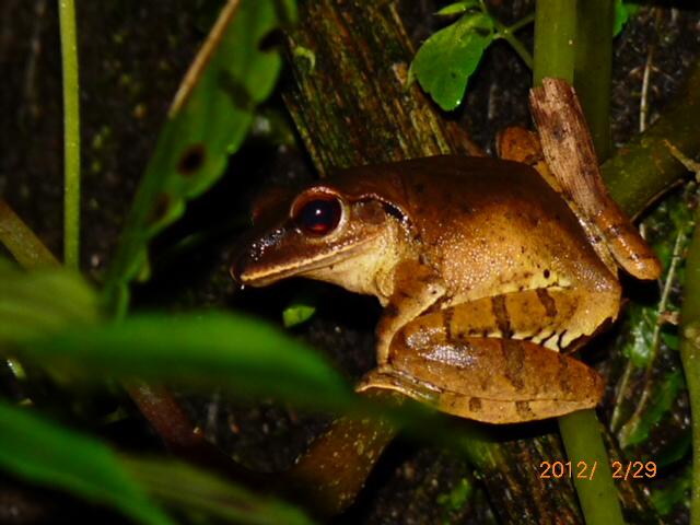 《越溪春—咏蛙》 - 不知有汉 - 不知有汉